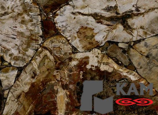 Натуральный камень Petrified Wood